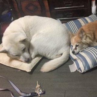 わんちゃん 猫ちゃんの邪魔にならない様に作業します。